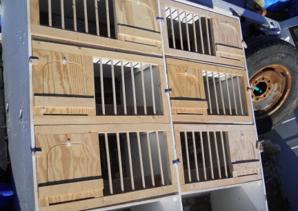 Breeding Boxes For Pigeons Pigeon Breeding Boxes