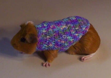 Matey in his Brand New Sweater