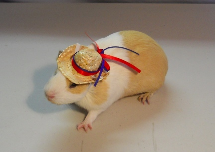 Damsel Straw Cowboy Hat with 4th July Ribbons